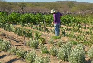 O Doutorado em Economia Rural é ligado ao Programa de Economia Rural do Centro de Ciências Agrárias (Foto: Arquivo/Agência Brasil)